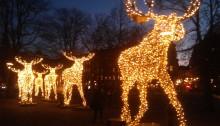 France Suède actualités C'est la trêve des confiseurs, un des rares moments de l'année où tout ou presque est suspendu le temps des fêtes. Joyeux Noël !